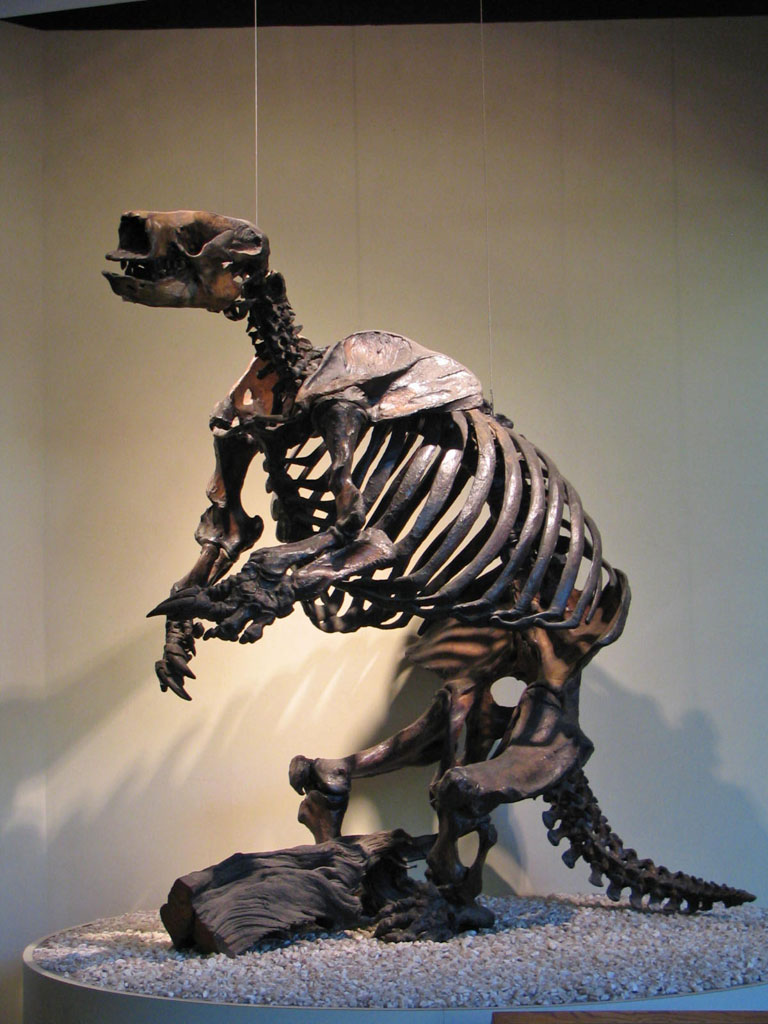 skeleton of a giant ground sloth